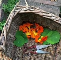 Flowers for summer salad - jeny Chandler Blog