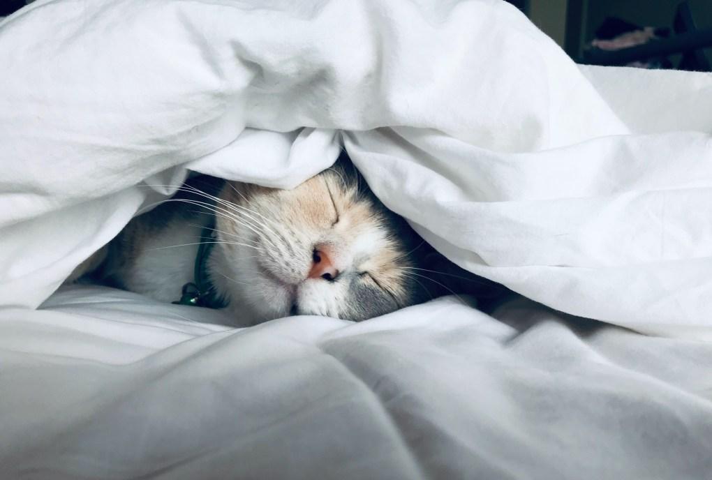 A sleeping cat looking happy