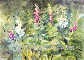 Foxgloves, 56 x 76cm, watercolour on paper, framed price £1,850