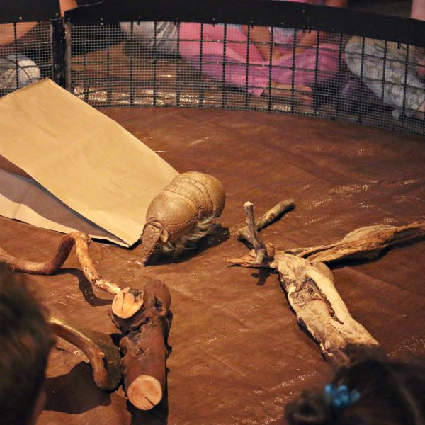 The Zoomazium Creature feature, feat. an Armadillo - A visit to the Woodland Park Zoo