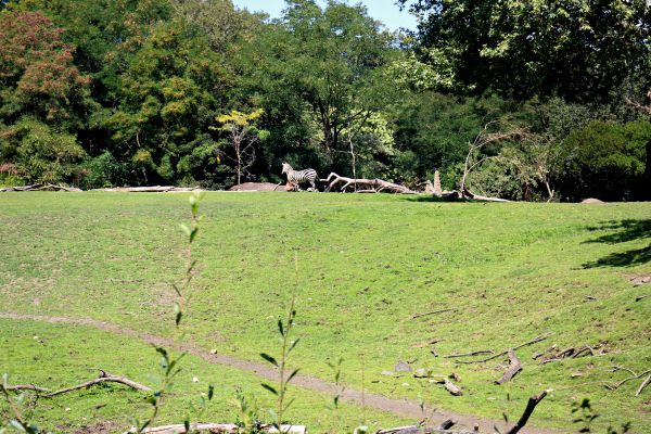 Zebras - A visit to the Woodland Park Zoo