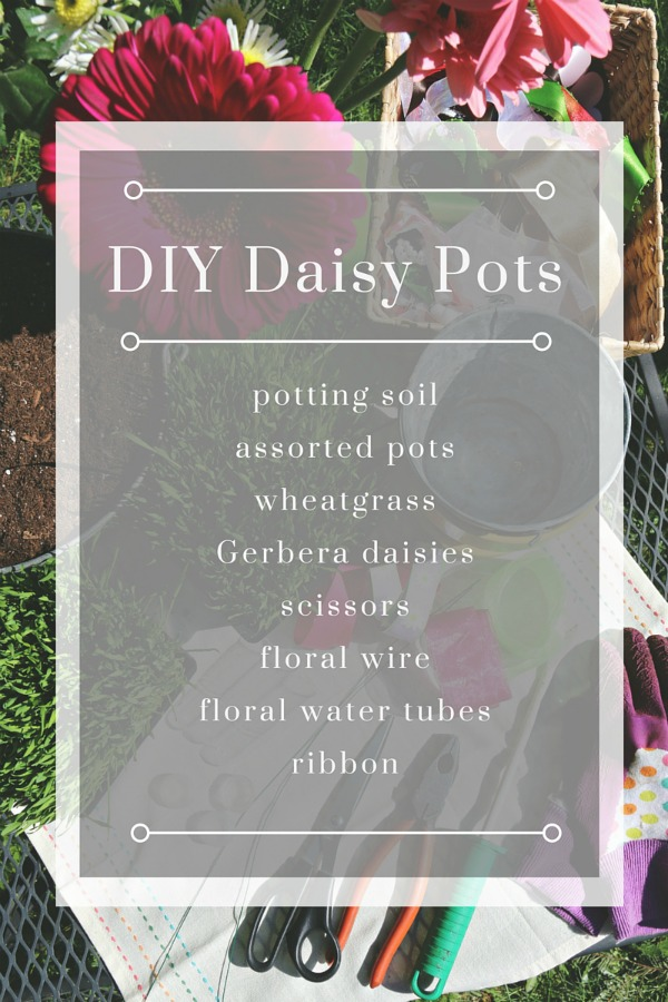 DIY Daisy Pots via @jennyonthespot
