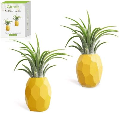 Pineapple airplant holders