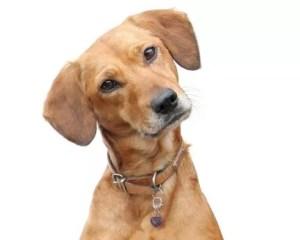 Amethyst Gemstone for Pets