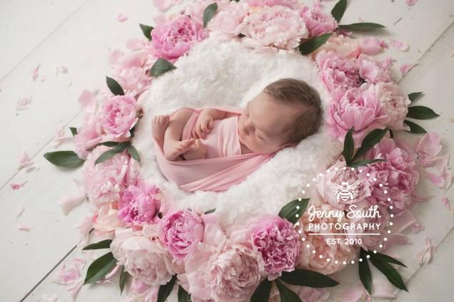 Newbornpeonypicture