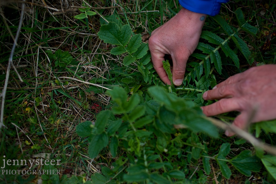 Ethical, foraging, green photographer