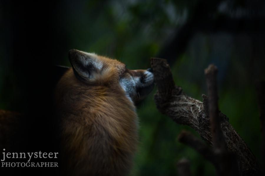 Secret-world-wildlife-rescue-photographer017