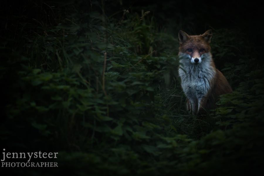 Secret-world-wildlife-rescue-photographer019