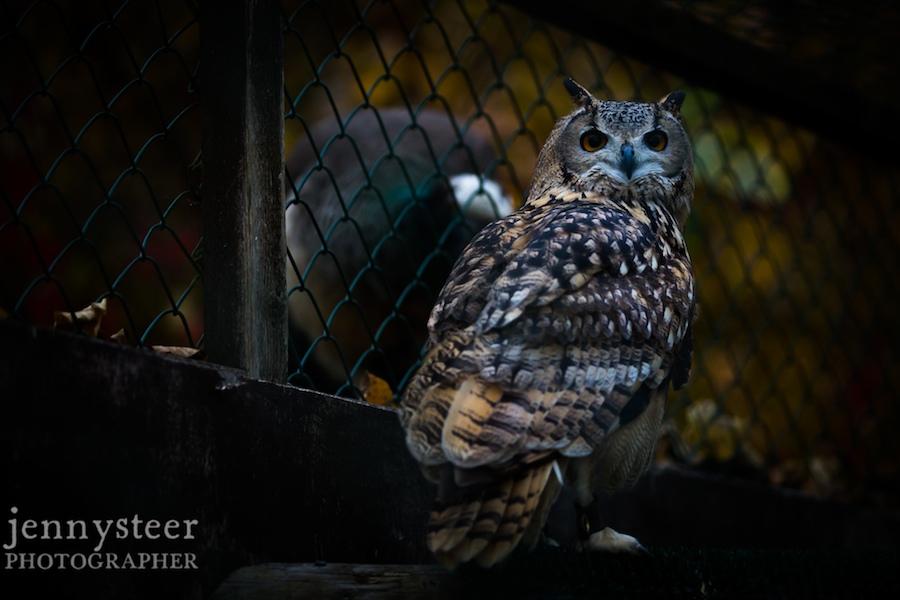 Secret-world-wildlife-rescue-photographer025
