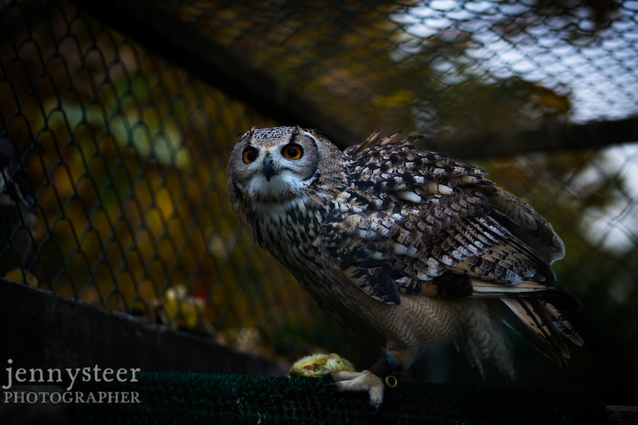 Secret-world-wildlife-rescue-photographer026