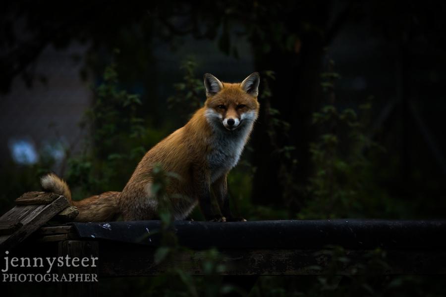 Secret-world-wildlife-rescue-photographer030
