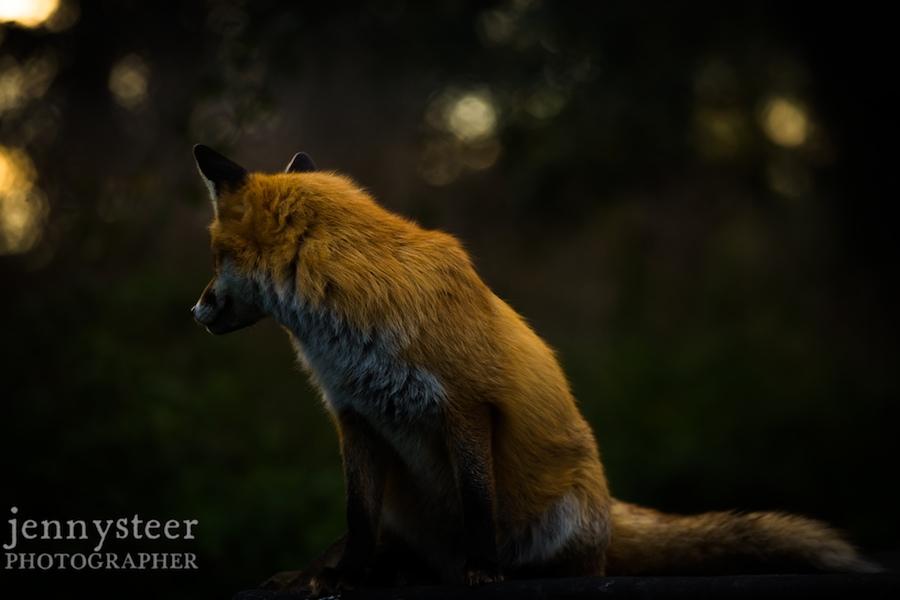 Secret-world-wildlife-rescue-photographer031