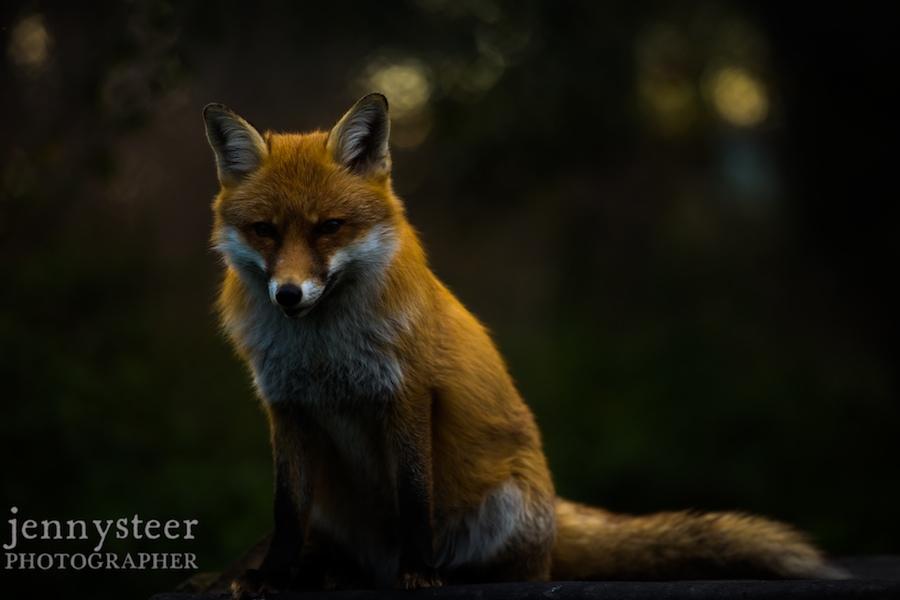 Secret-world-wildlife-rescue-photographer033