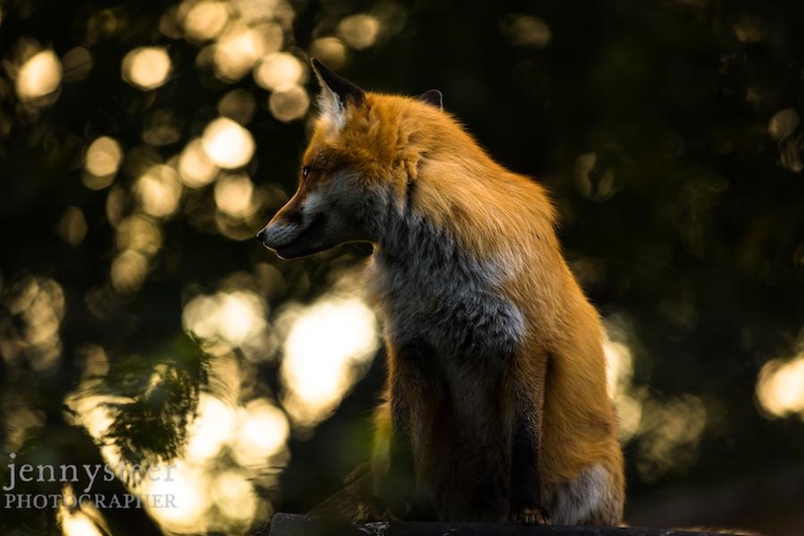 Secret-world-wildlife-rescue-photographer037