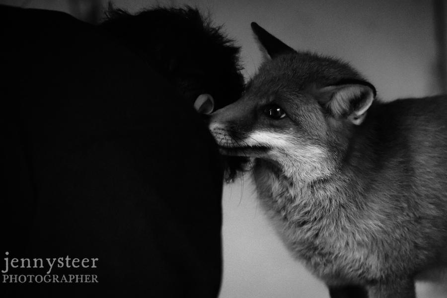 Secret-world-wildlife-rescue-photographer042