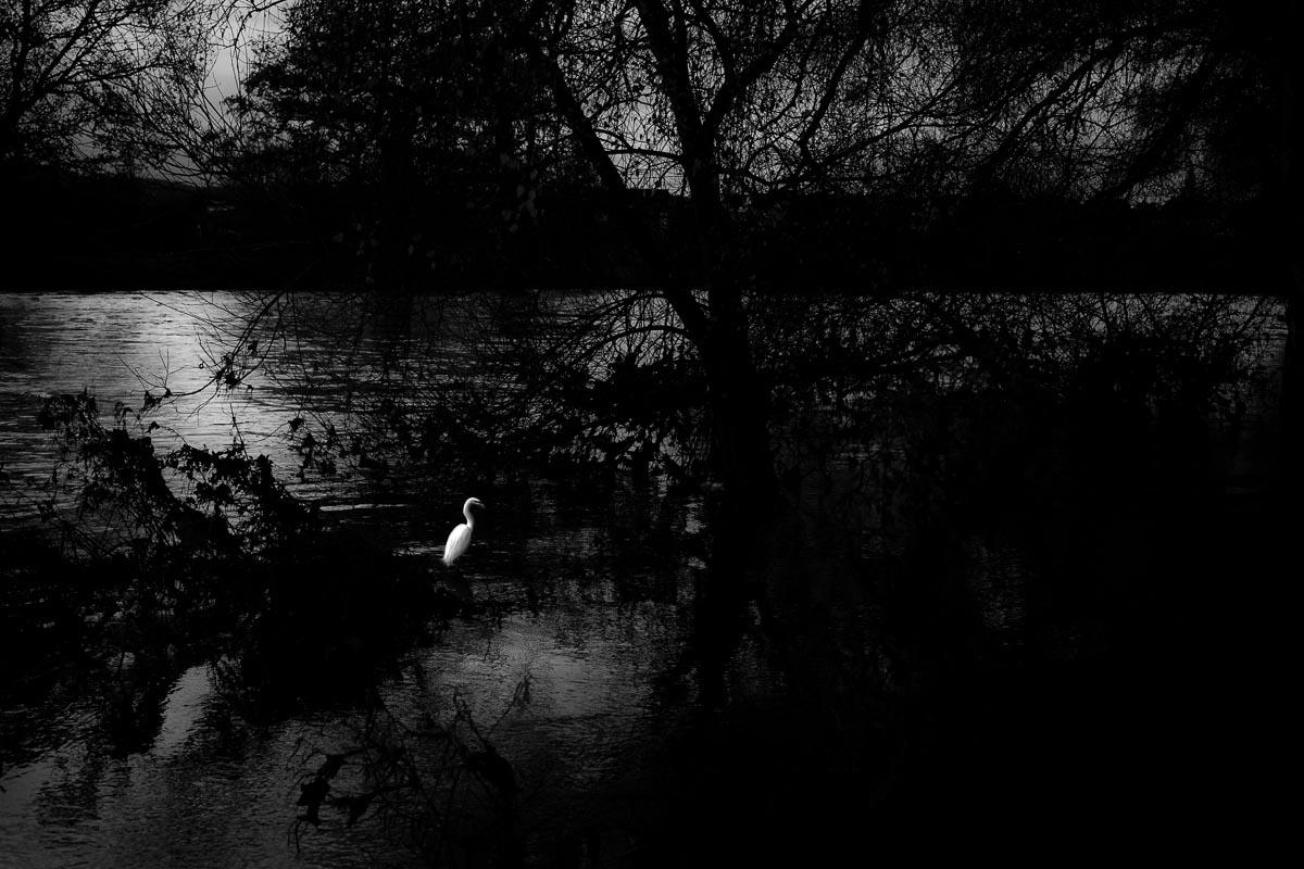 Documentary nature photographer photojournalist, Devon, Dorset, Cornwall, Somerset, Exeter, UK, abroad