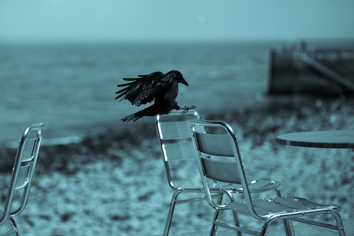 Bird_photographer_008A