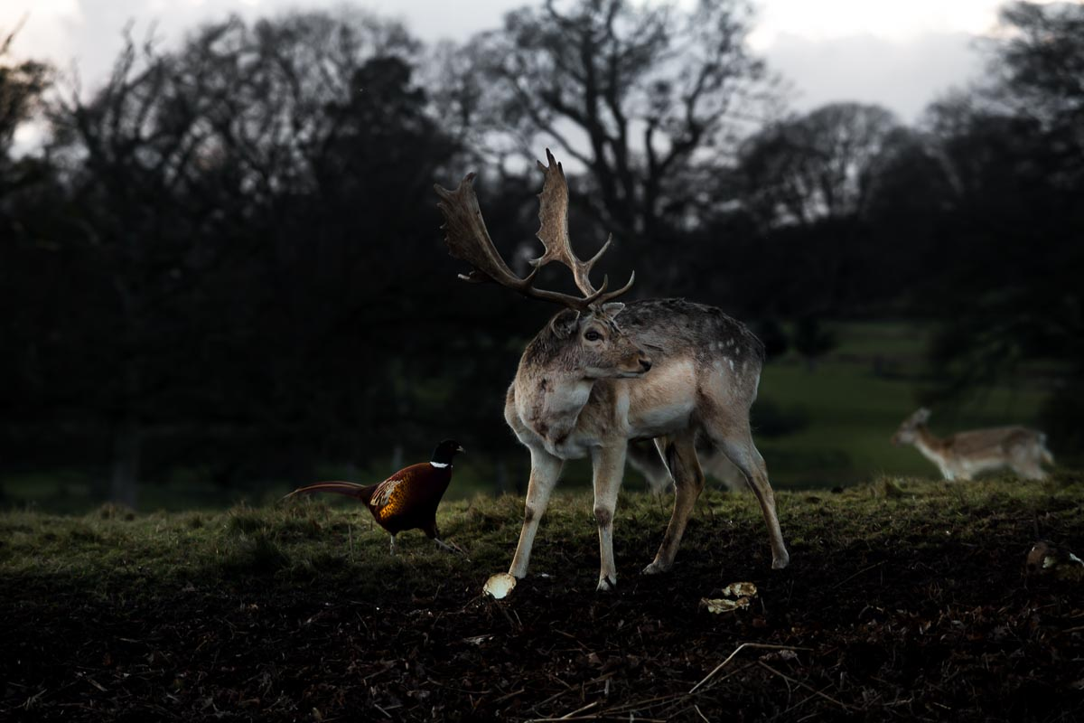 Deer_photographer_005