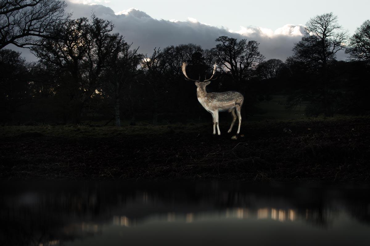 Deer_photographer_007