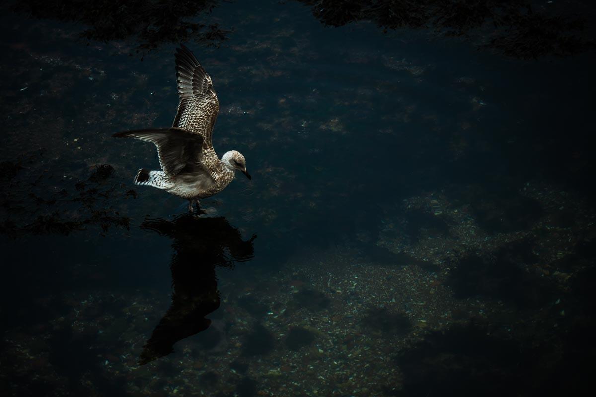 Documentary nature birds Gull seagull photographer photojournalist, Devon, Dorset, Cornwall, Somerset, Exeter, UK, abroad