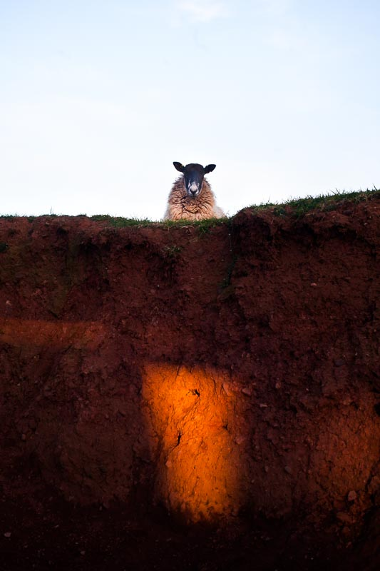Sheep_photographer_006
