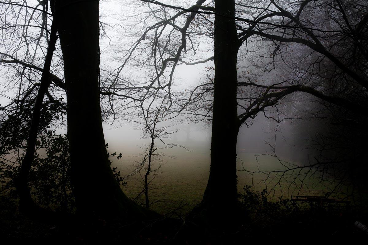Trees_photographer_002