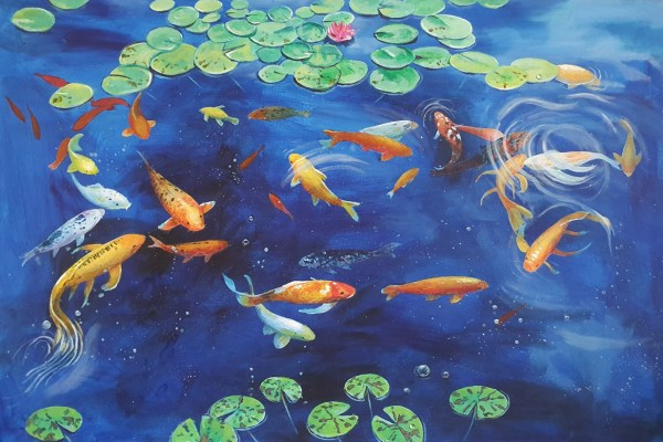 Koi carp and goldfish in a pond with lily leaves by jenny urquhart