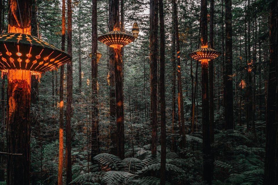 Canopy Walk Rotorua