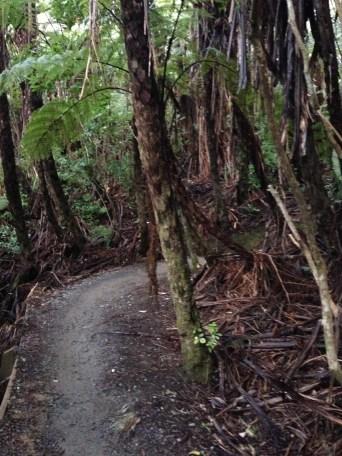 Bush trail in Wellington