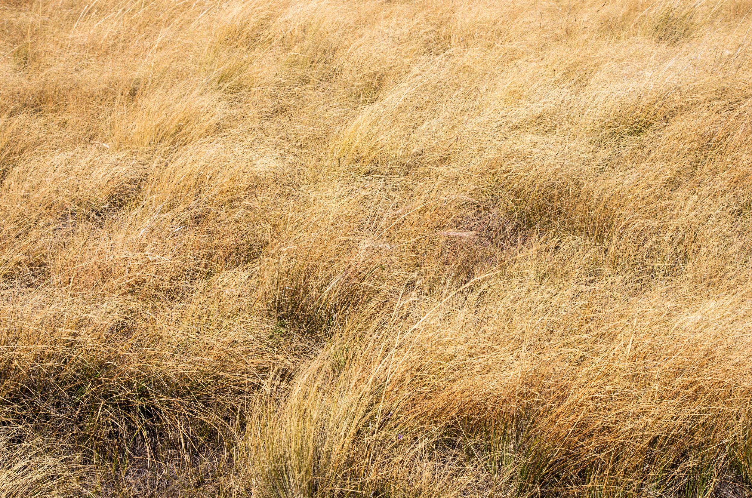 jenphotographs mueller state park mountain meadow grass