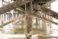 is anyone else singing 'under the board walk, we'll be having some fun'?