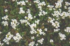 Week-13-Day-89-Flowers-14