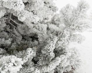 Todays-Photo-12-1-15-Frosty-Frost-2