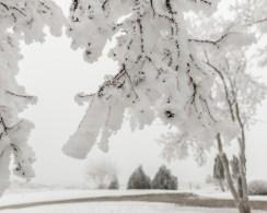 Todays-Photo-12-1-15-Frosty-Frost-6