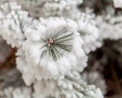 Todays-Photo-12-1-15-Frosty-Frost-9