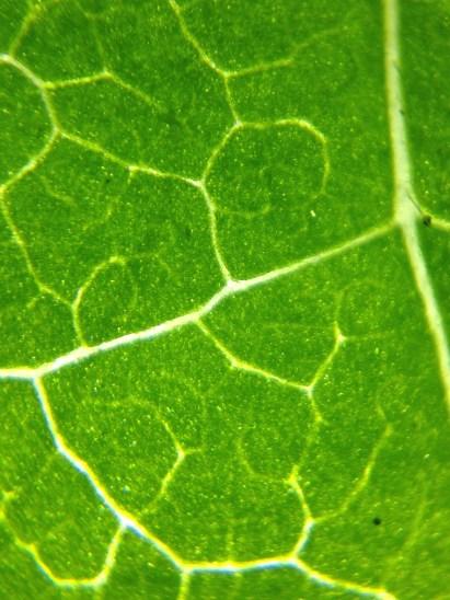 8a_leaf
