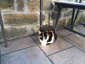 Croatian Kitty!
