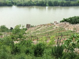 Old vineyards of the castle