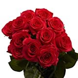 GlobalRose 1 Dozen Red Roses- Fresh Flowers- Fast Delivery  by GlobalRose