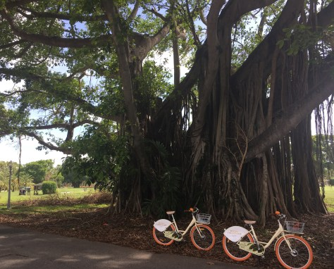 Bike Ride around Coral Gables