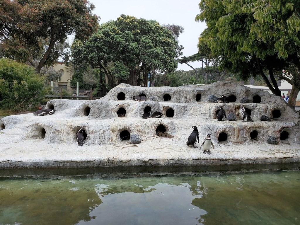Penguins at San Francisco Zoo
