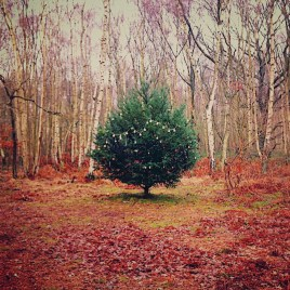 A Boxing Day walk on Wimbledon Common