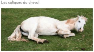 classe-equine-fiche-sante-cheval-colique-je-peux-pas-jai-poney