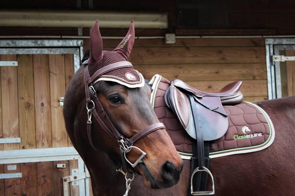{CLASSEQUINE} Votre cheval est entre de bonnes mains, les vôtres
