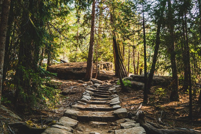 A stone path through the woods