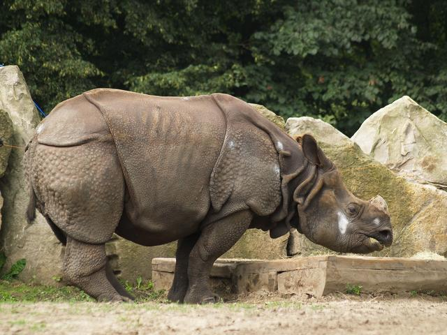 Rhinoceros Warsaw Zoo Jess And Jers Poland Sweeden