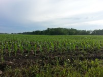 Biking Rural Scott County Minnesota (13)