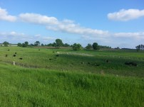 Biking Rural Scott County Minnesota (9)