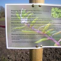New Zealand Pigmyweed, Crassula helmsii