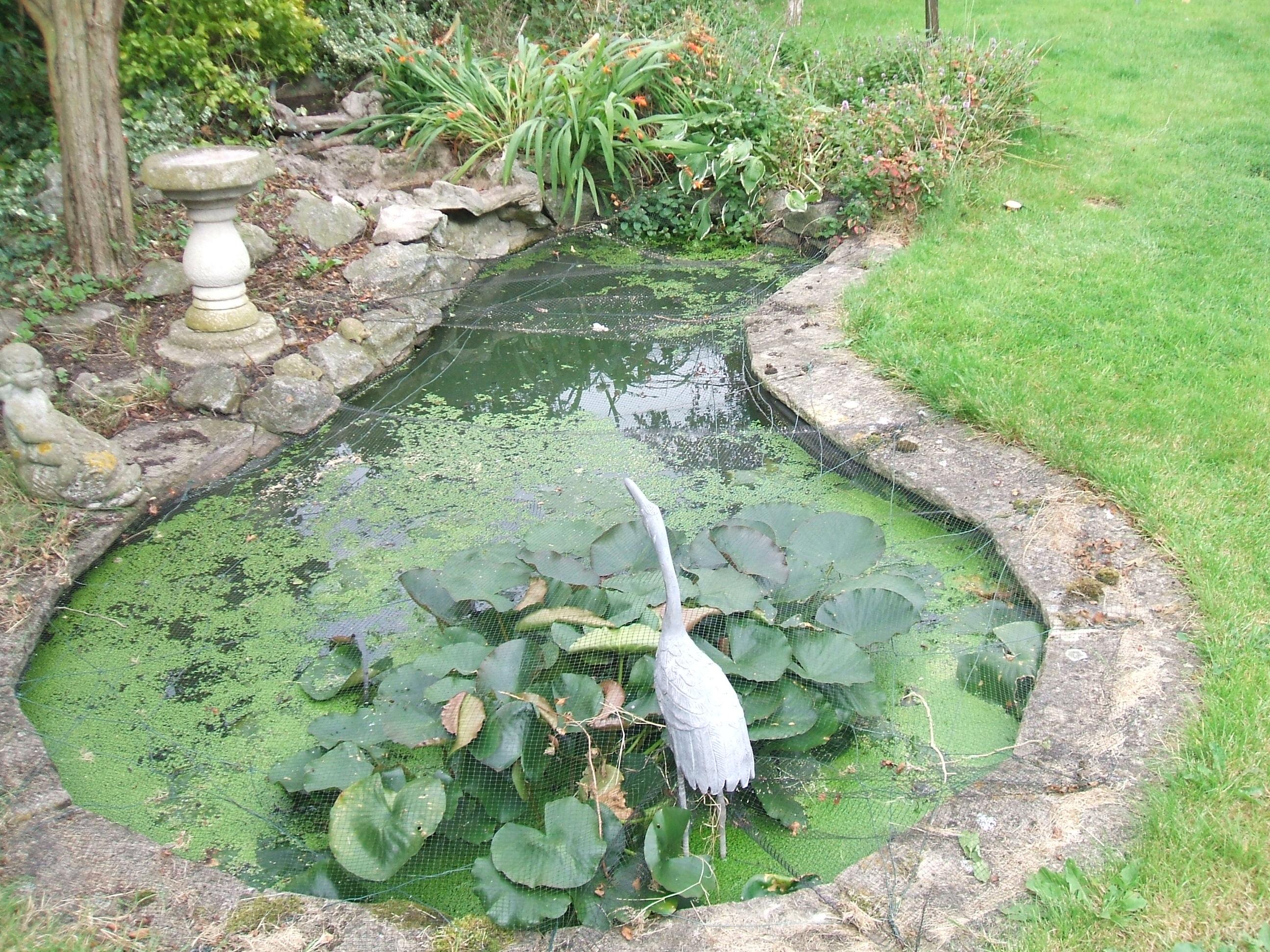 Garden pond design   The Garden Pond Blog on Landscape Pond Design id=40705